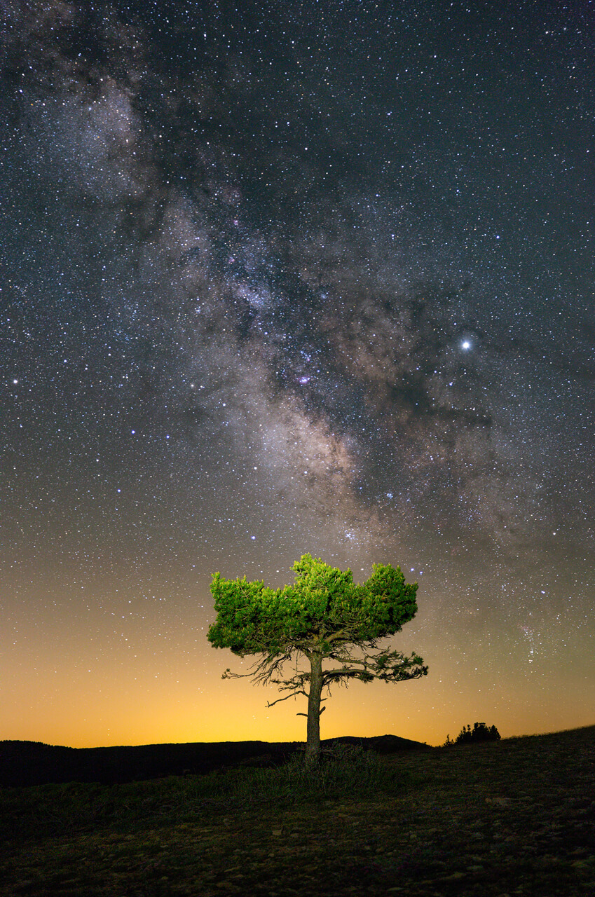 Detailed Milky Way over the tree